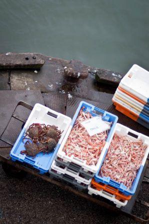Débarque des langoustines